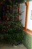 Weihnachtsfeier 2010_1